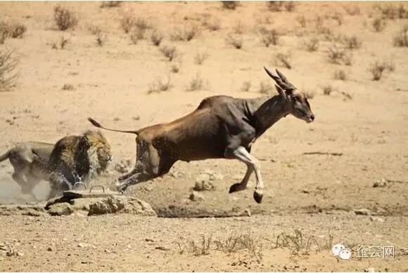 世界上跑得最慢的动物